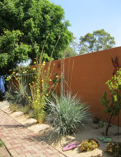 Xeriscape Fence Plantings