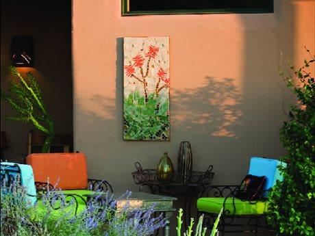 colorful desert plants