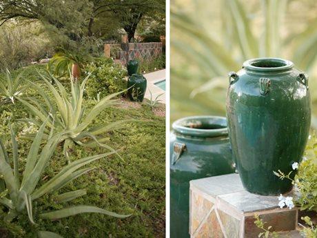 lush xeriscape green pottery