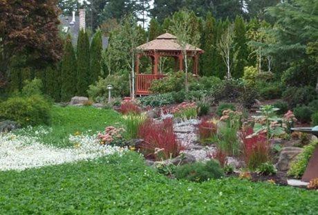 Create a Rain Garden