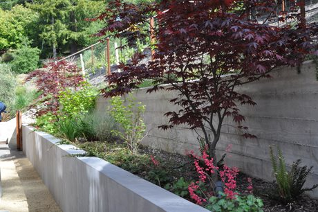 Board Formed Concrete, Retaining Wall Huettl Landscape Architecture Walnut Creek, CA