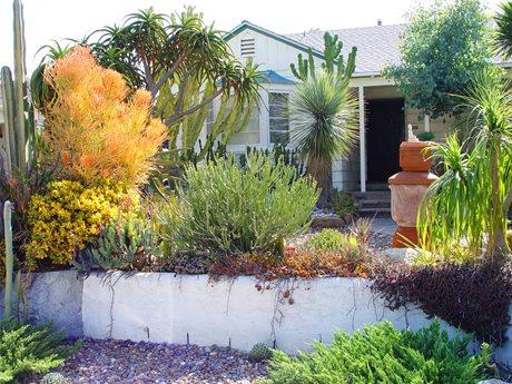 Succulents, Garden, Euphorbias, Firesticks Maureen Gilmer Morongo Valley, CA