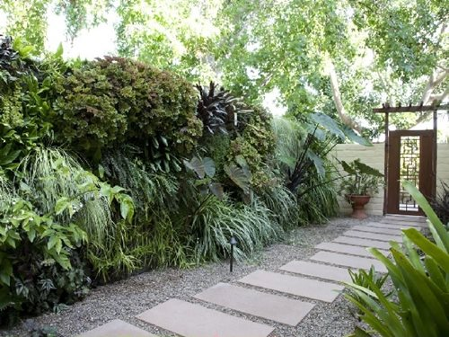This side yard features a living wall and a walkway made of concrete ...