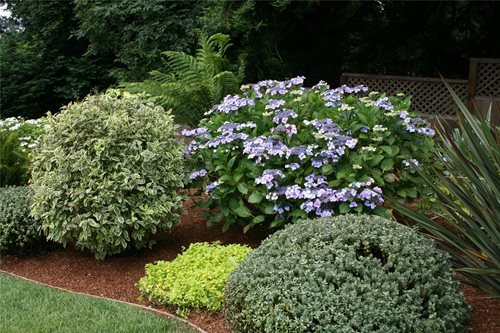 Design Plan Front yard landscaping ideas with mulch Must see