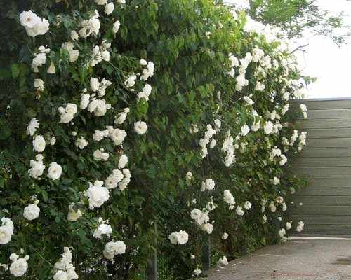 Greenscreen Trellis Fence Panels Landscaping Network