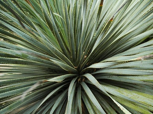 Plants For A Mexican Garden Landscaping Network