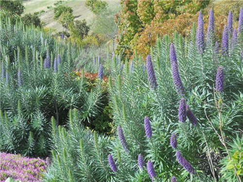 Good Plants for San Diego - Landscaping Network