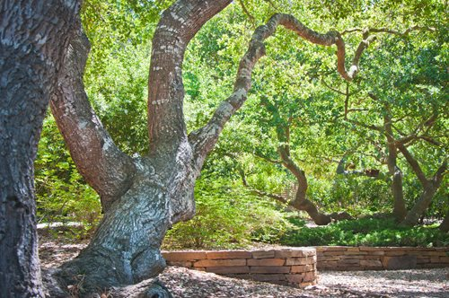 Landscaping Around Small Trees : Landscape trees landscaping network