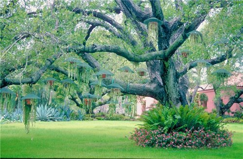 Landscaping Around Trees With Big Roots : For landscaping around trees ideas