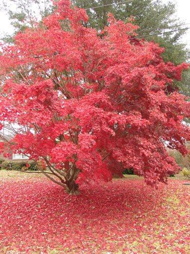 Small Tree Types
