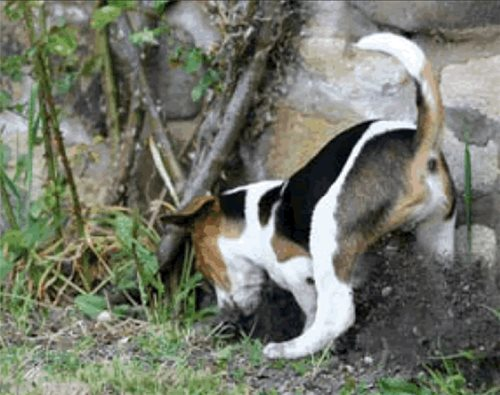 Petscaping Principles For A Dog Friendly Yard