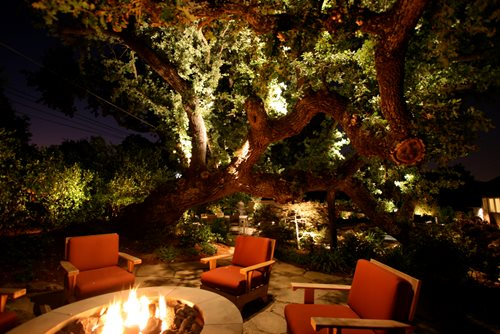 Backyard Dream Meaning : The oak trees are lit with modified and custom fixtures The light
