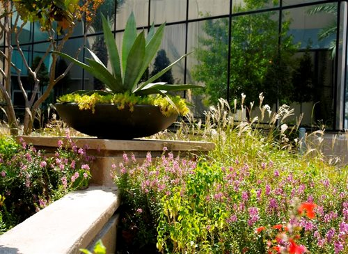 Landscaping ideas houston landscaping network Houston garden centers houston tx