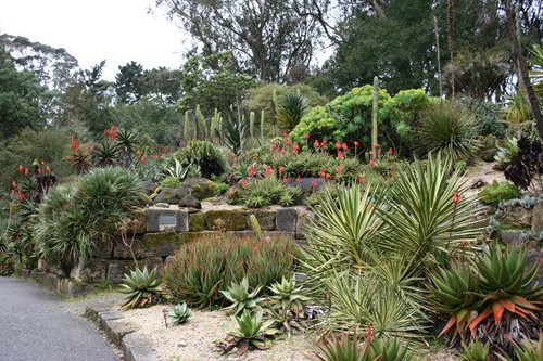 Visit the san francisco botanical garden landscaping network for Botanical garden design