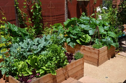 Vegetable garden design ideas landscaping network for Compact vegetable garden ideas