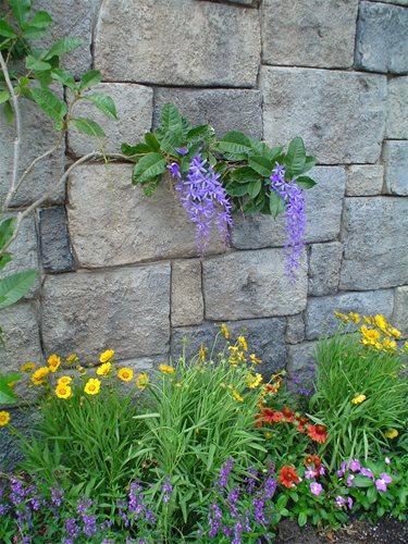 Well Behaved Vines With Beautiful Flowers Are Highly Desirable Side Yard  Planting.