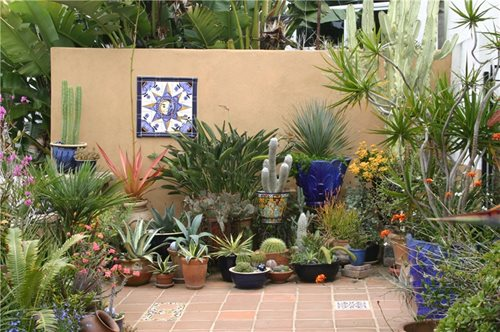 Debra Lee Baldwin on Succulents Landscaping Network