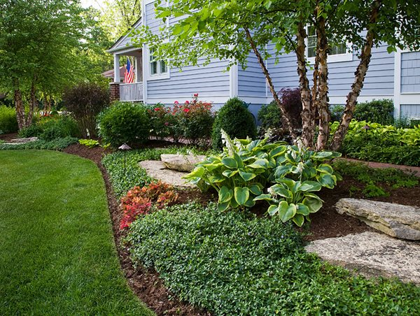 Landscape Bed, Groundcover, Hosta Grant & Power Landscaping West Chicago, IL