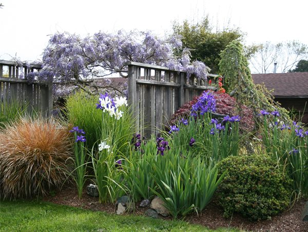 Fence Screens Front Yard Landscaping Genevieve Schmidt Landscape Design and Fine Maintenance Arcata, CA