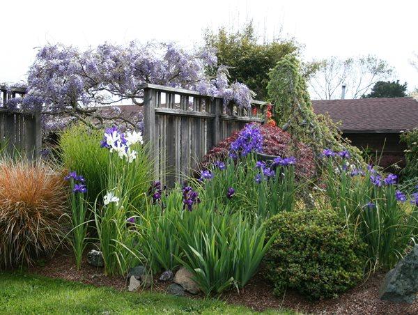 Fence Screens Genevieve Schmidt Landscape Design and Fine Maintenance Arcata, CA