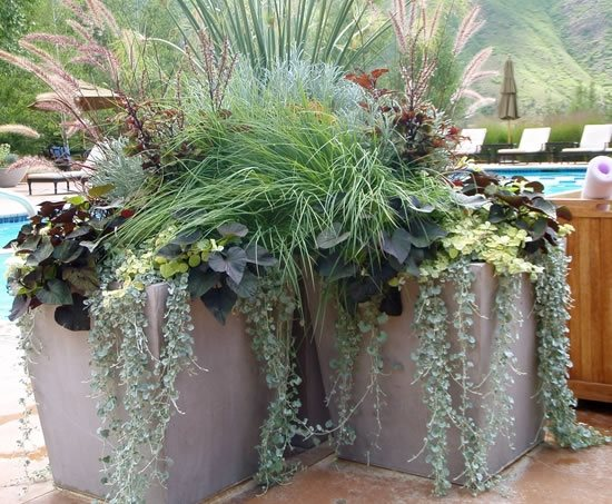 Container Gardens - Carbondale, CO - Photo Gallery - Landscaping ...