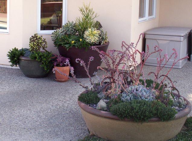 Container gardens santa barbara ca photo gallery for Succulent dish garden designs