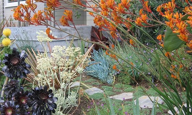 La Sf Drought Education Programs besides 112660428151160890 as well Low Maintenance Front Yard Landscaping additionally Ca Elow Landscape Design And Build Drought Tolerant Plants 1493 further Selection of seasonal colors flowers and plants. on drought tolerant landscaping rocks