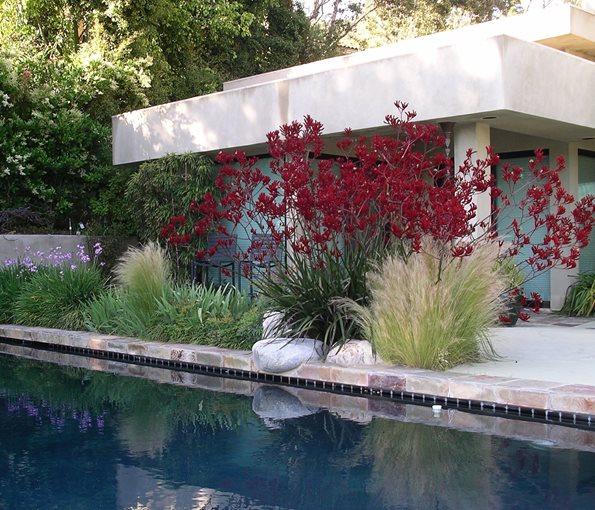 Garden design venice ca photo gallery landscaping for Garden pool plants