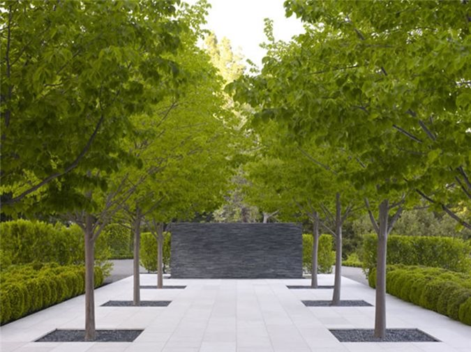 Grouping Trees In The Landscape Landscaping Network
