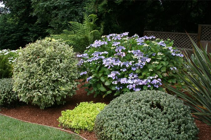 Front yard curb appeal landscaping network for Great bushes for landscaping