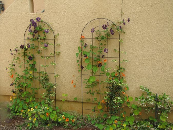 Landscaping With Trellis : Garden structure definitions pergola or patio cover landscaping