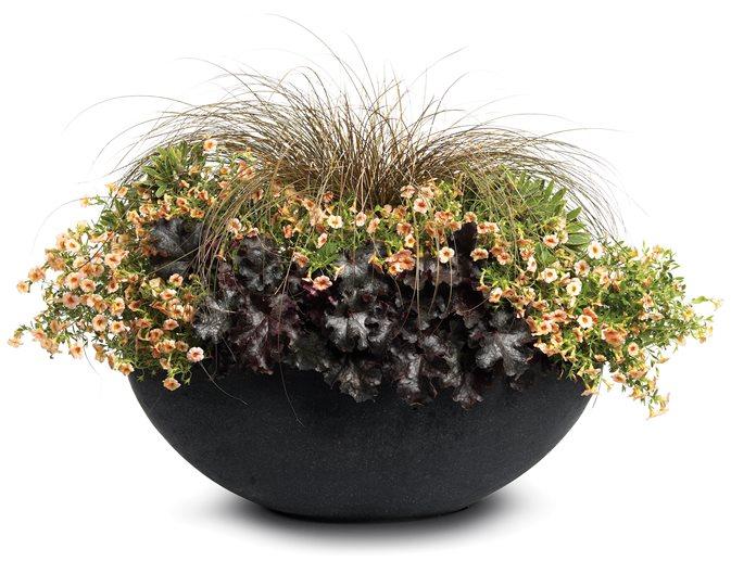 Esta planta crece hojas azules brillantes para ayudarlo a sobrevivir en la oscuridad - The Washington Post