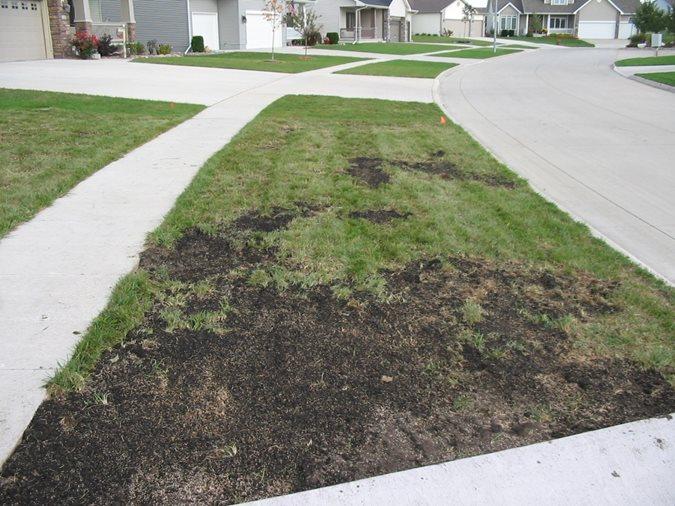 Lawn Repair Amp Reseeding Landscaping Network