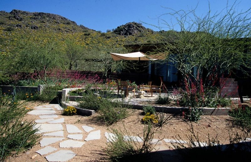 Arizona landscaping phoenix az photo gallery for Ten eyck landscape architects