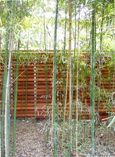 Tigerwood Fence Asian Landscaping Austin Outdoor Design Austin, TX