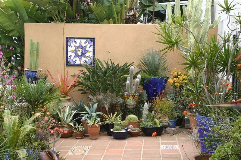 Container Garden Design residential container garden landscape design accented with multi color annuals Container Gardens Bishop Garden Design San Diego Ca