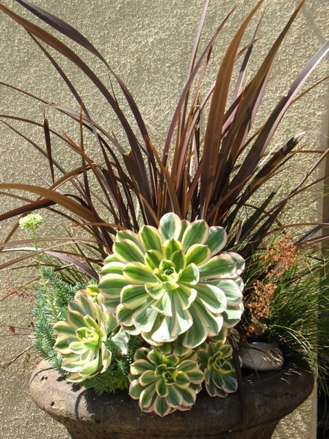 Container Plant Combo Container Gardens Designs by Shellene San Diego, CA