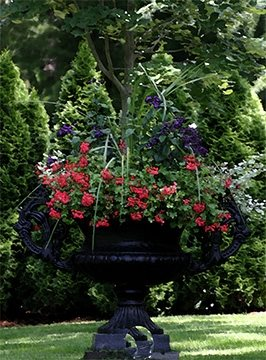 Container Gardens Elaine M. Johnson Landscape Design Centerville, MA