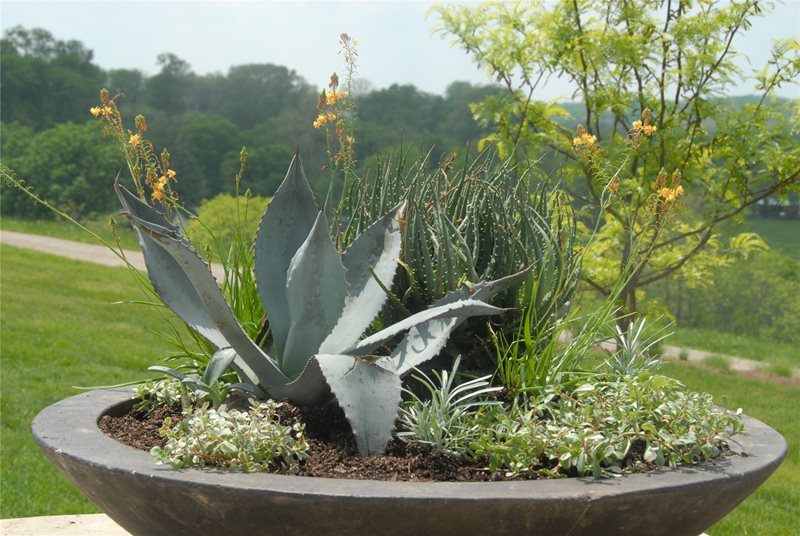 Container Gardens Inside Out Design, LLC Frankfort, KY