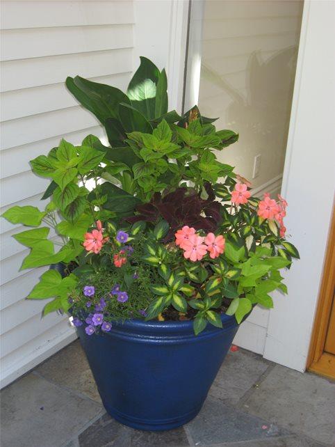 Container Gardens Spring Greenworks Bellevue, WA