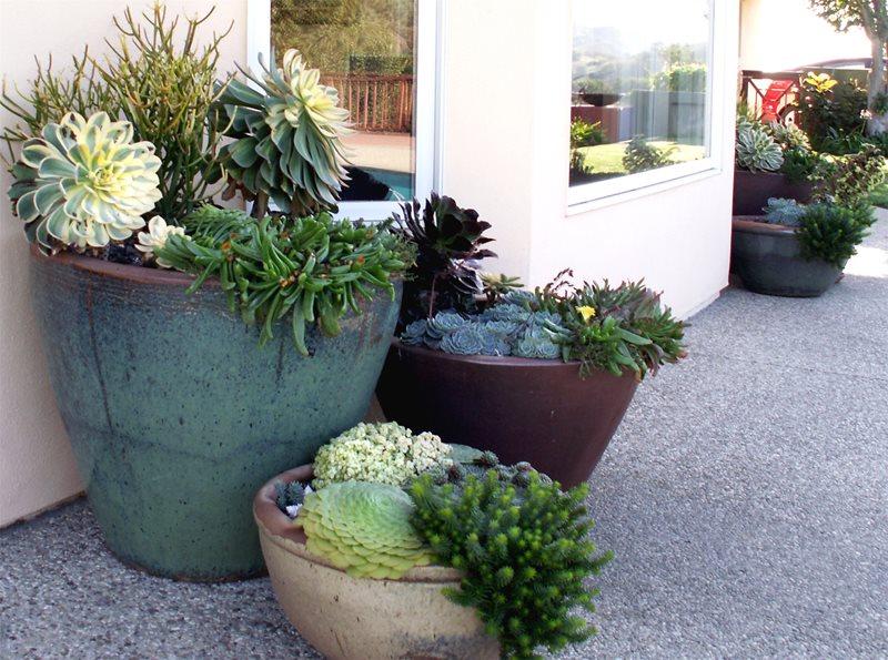 Succulent Pots Container Gardens Grace Design Associates Santa Barbara, CA
