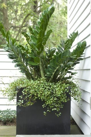 Container Gardens Westover Landscape Design Tarrytown, NY