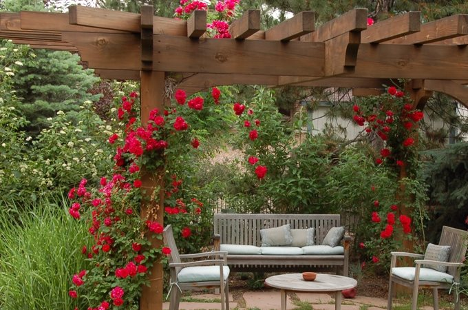 Patio Cover Climbing Roses Country Landscape Design Designs By Sundown Englewood, CO