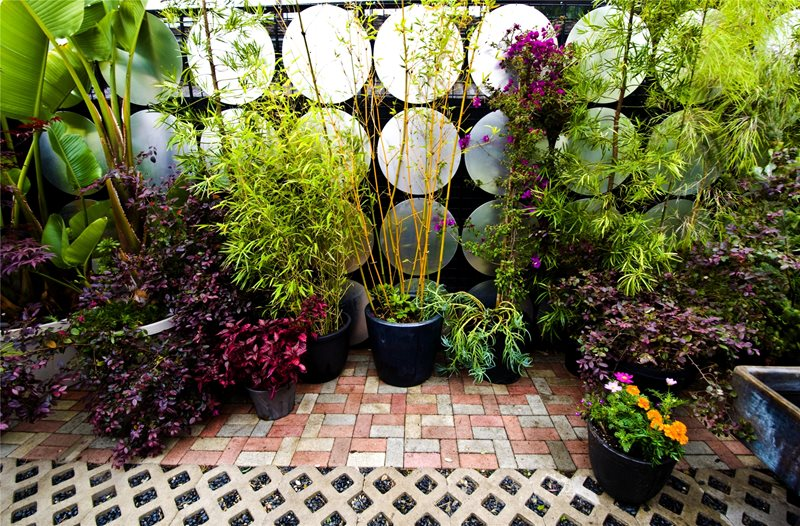 Plants, Flowers, Trees Decor and Accessory Landscaping Network Calimesa, CA
