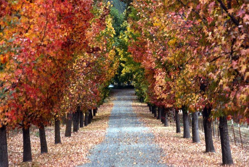Allee Driveway Maureen Gilmer Morongo Valley, CA
