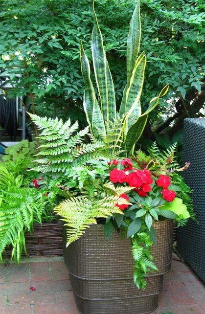 Container Garden Garden Design Livable Landscapes Wyndmoor, PA