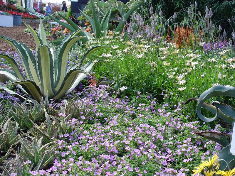 Groundcovers For Slope Garden Design Maureen Gilmer Morongo Valley, CA