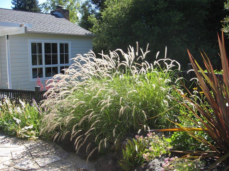 Planting Beds Garden Design Dig Your Garden Landscape Design San Anselmo, CA