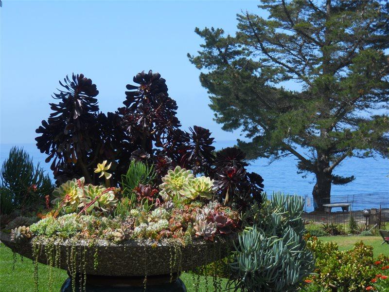 Planting Design, Colors Garden Design Landscaping Network Calimesa, CA