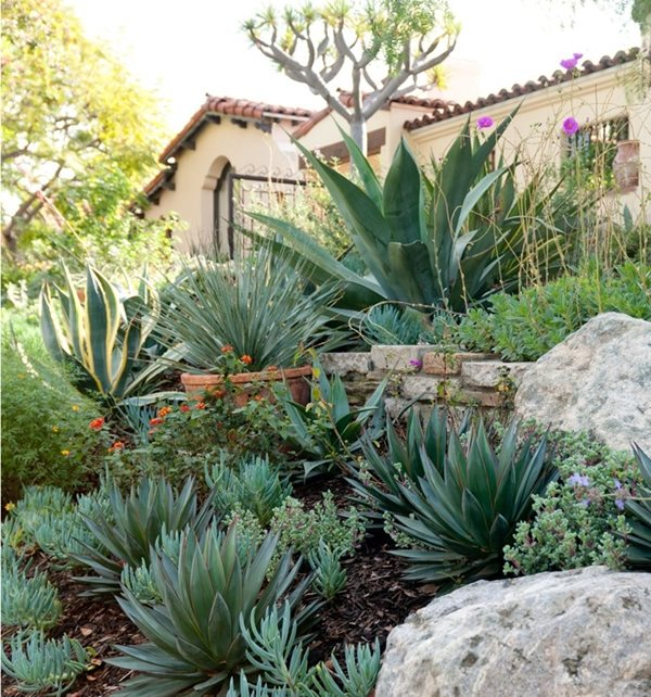 Spanish Plants Garden Design Sandy Koepke Interior Design Los Angeles, CA